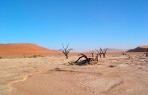 Nigeria becoming a desert, NCF raises alarm