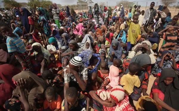 Real reason IDPs staged protest in Borno –NEMA
