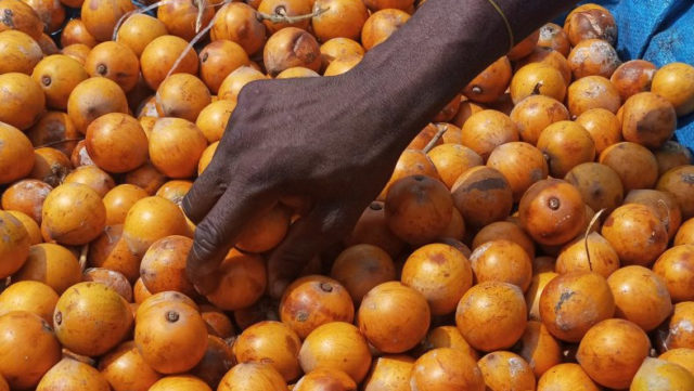 'Agbalumo': Expert explains healing power