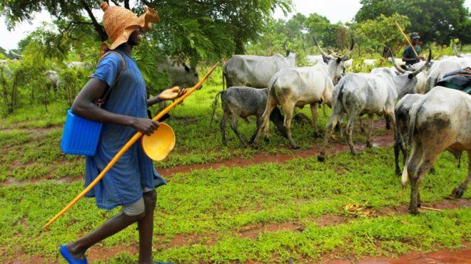 Oyo: Fulani group kicks against anti-grazing bill, says herders will suffer
