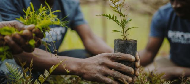 Erosion control: Plant trees, environmental expert urges Nigerians