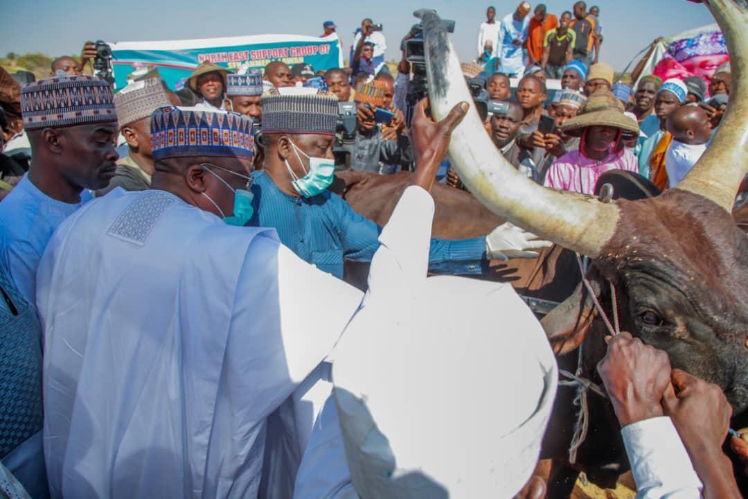 Senate President flags off free mass animal vaccination in Yobe