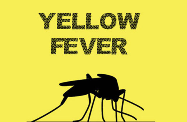 Yellow fever outbreak claims 29 lives in Bauchi
