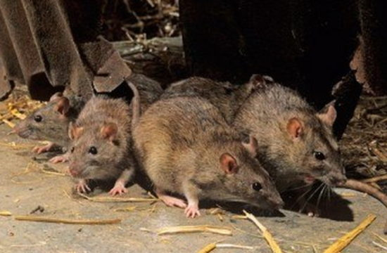 Lassa fever: Kwara sets up isolation centre, begins border screenings